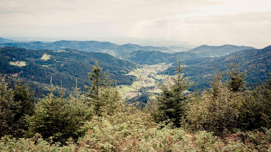 160 Kilometer lang und 60 Kilometer breit: Der Schwarzwald bietet viel Raum für Wanderer.