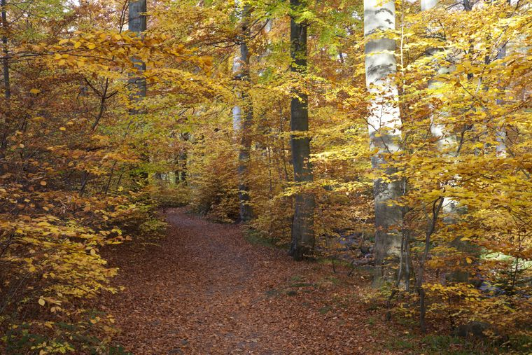 Diese Strecke ist ein Gedicht: der Heinrich-Heine Wanderweg im Ilsetal.