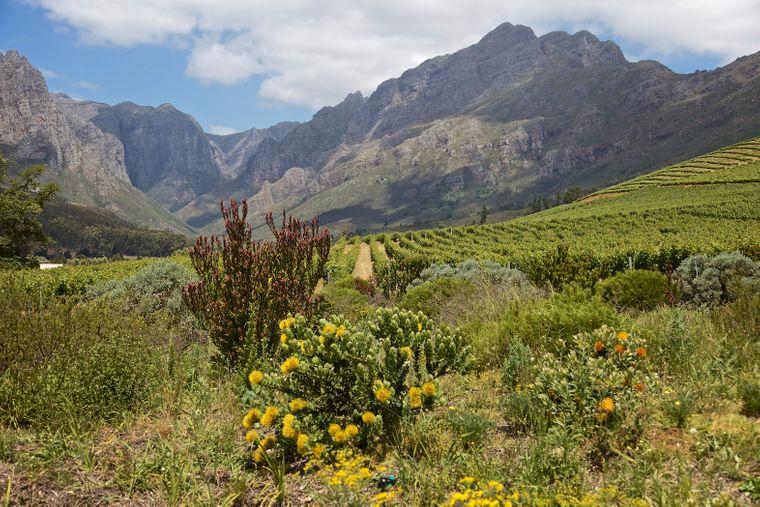 Blick in die faszinierende Natur Südafrikas.