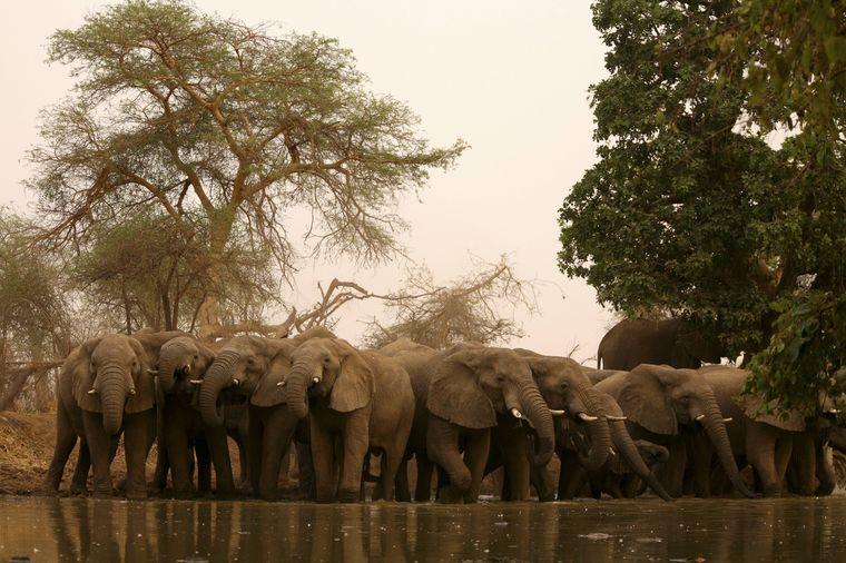 Elefanten an einem Wasserloch im Zakouma-Nationalpark im Tschad.