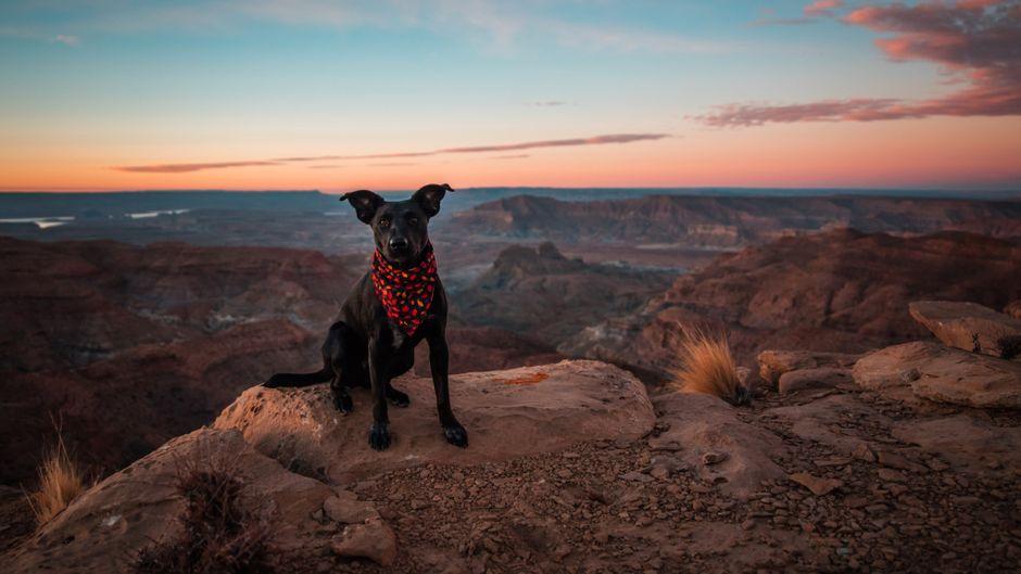 Diese Tiere sind echte reisende Petfluencer. (Symbolfoto)