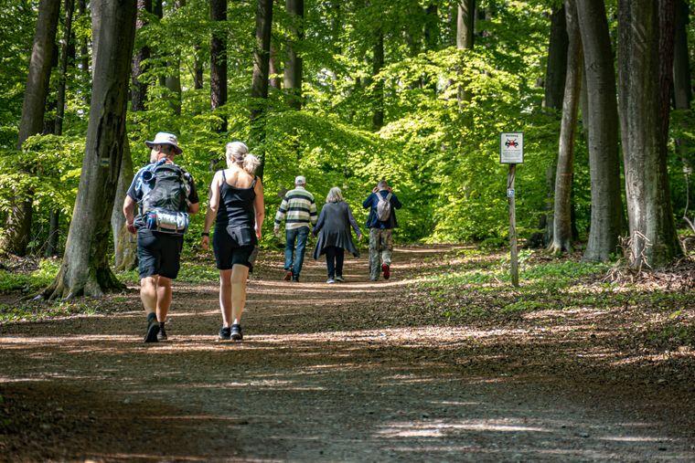 In Brandenburg gibt es rund 2000 Kilometer Wanderwege mit besonderer touristischer Relevanz.