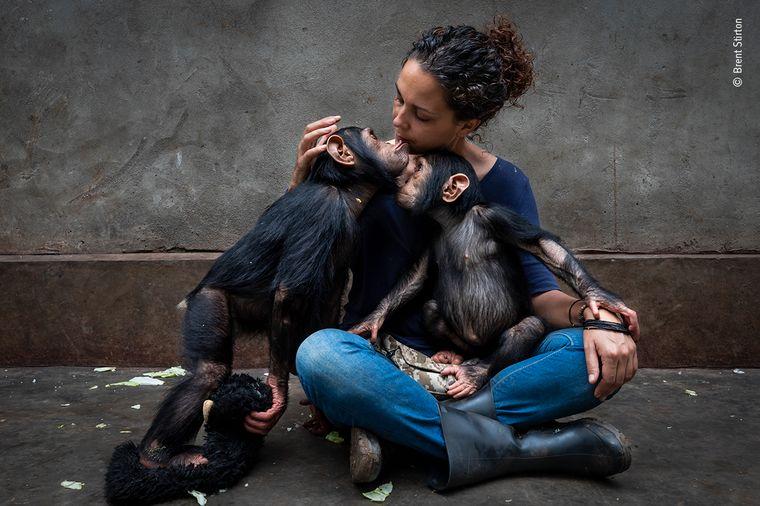 Itsazo Velez, die Leiterin eines Rehabilitationszentrums für verwaiste Schimpansen in Kinshasa, kuschelt mit zwei Tieren. Das Foto schoss Brent Stirton, er gewann damit in der Kategorie Fotojournalist/Story.