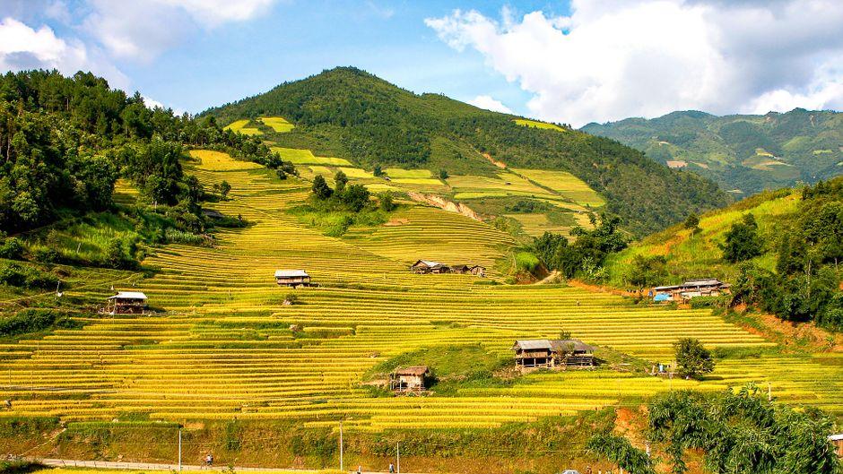Reisfelder erstrecken sich zu Füßen der Berge.