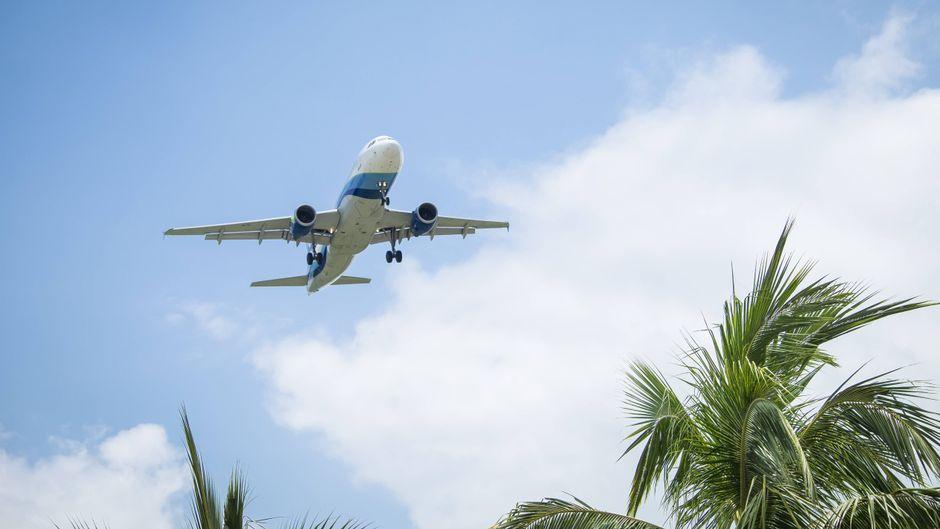 Ein Flugzeug fliegt über Palmen.