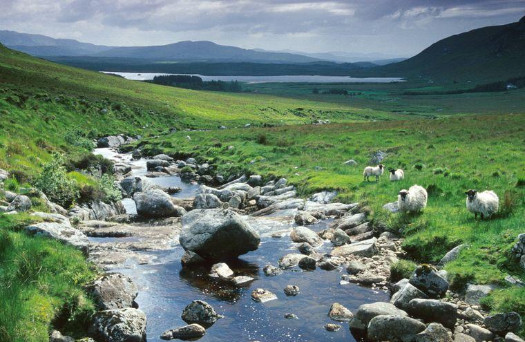Begegnungen mit Schafen sind im Glenveagh-Nationalpark keine Seltenheit.