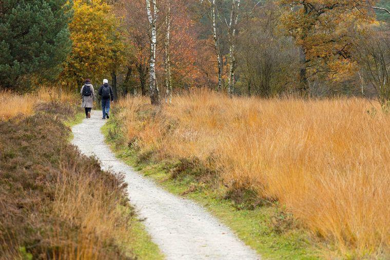 Einmal quer durch die Lüneburger Heide wandern: Auf dem Heidschnuckenweg geht das besonders gut.