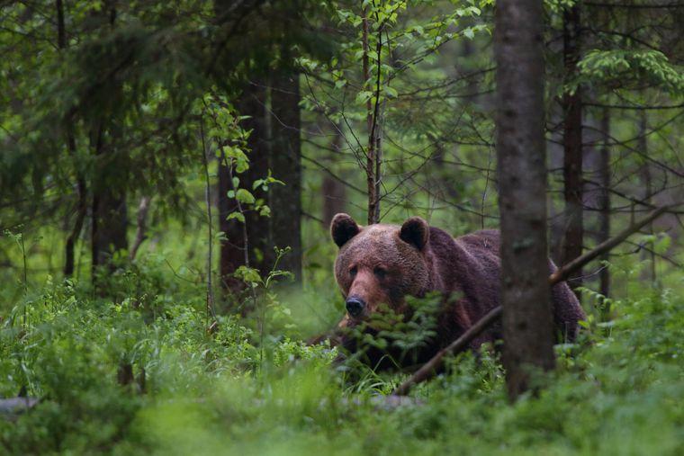 Im Lahemaa-Nationalpark in Nordestland leben Elche, Wildschweine und auch Bären.