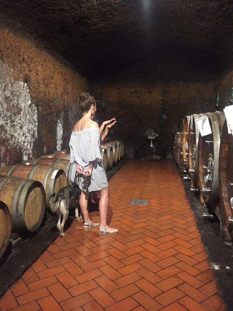 Weinkeller des Weinguts Sasso Tondo, Toskana
