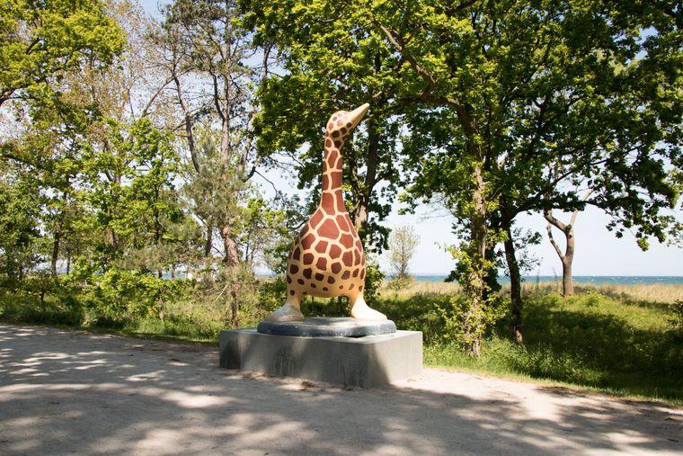 Ein bisschen verrückt, aber sehenswert: die Giraffengans.