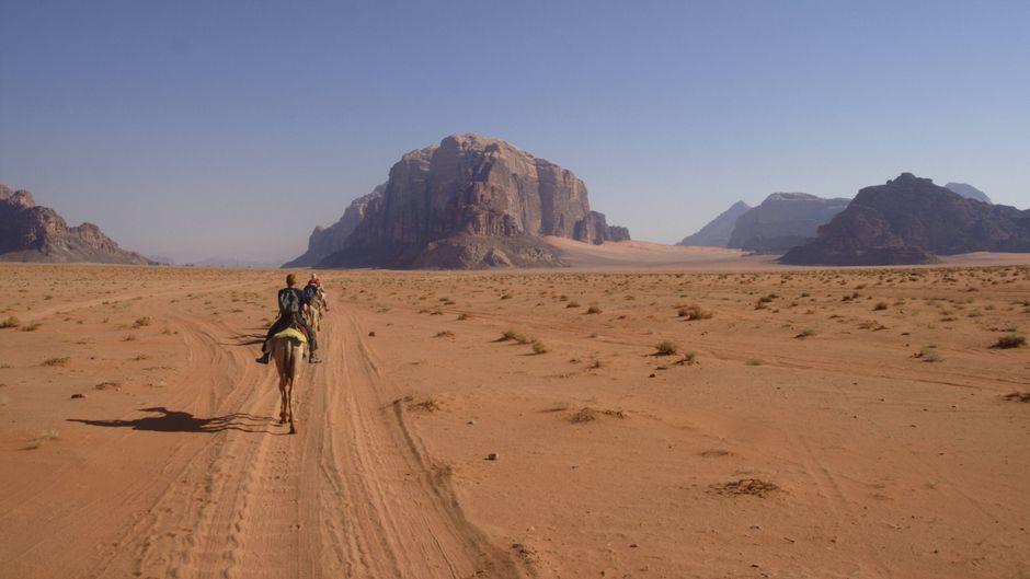 Kamele in der Wüste Wadi Rum in Jordanien