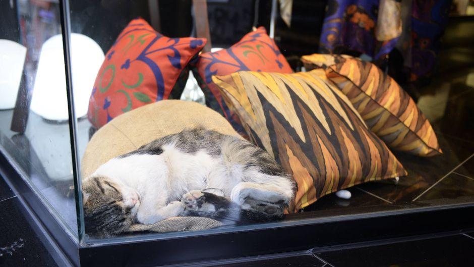 Eine Straßenkatze schläft in einem Istanbuler Schaufenster.