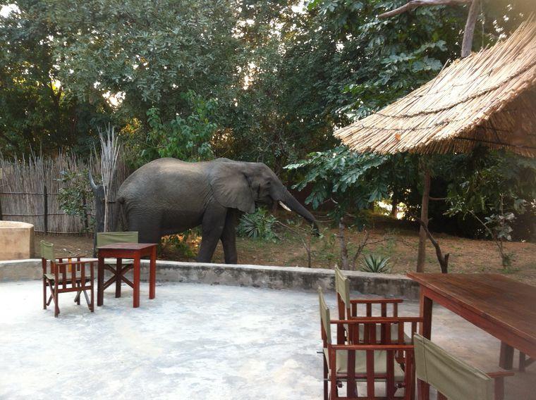 """Im """"Track & Trail""""-Camp kann dir durchaus mal ein Elefant über den Weg laufen."""