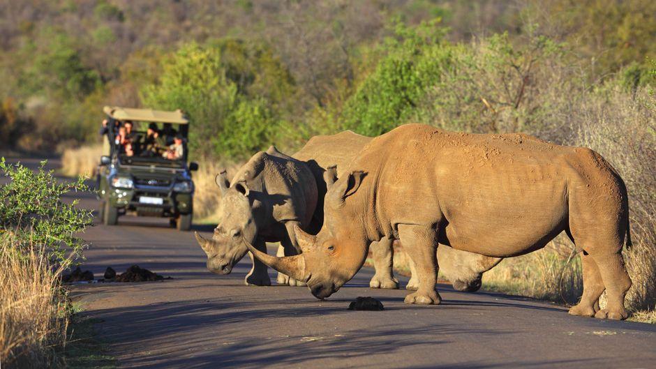 Du willst wilde Tiere sehen? Der reisereporter weiß, wann das wo am besten möglich ist.