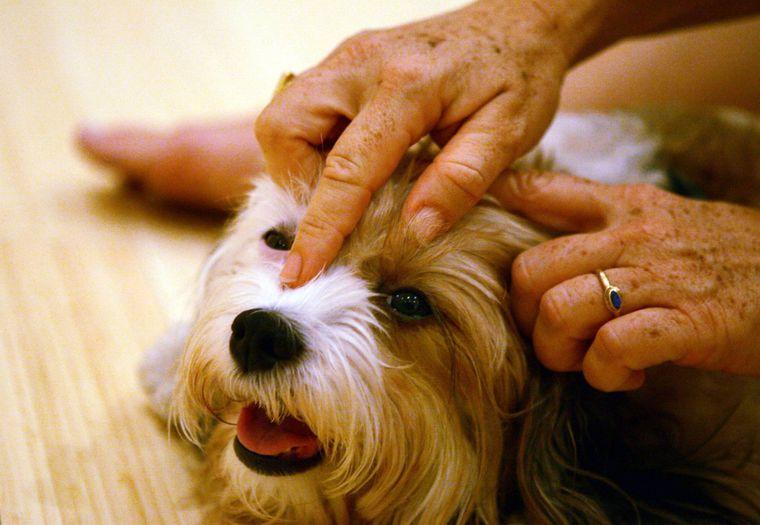 In manchen Hotels kannst du sogar eine Massage für deinen Hund buchen. (Symbolfoto)