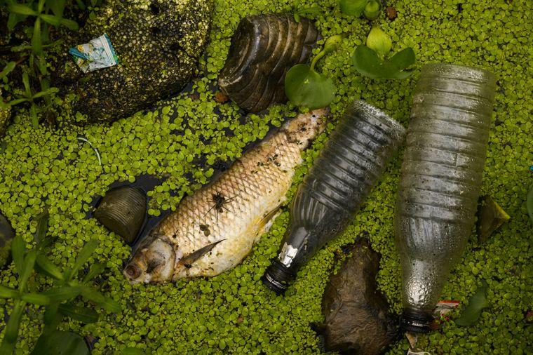 Veendeter Fisch in einem Gewässer in Indien
