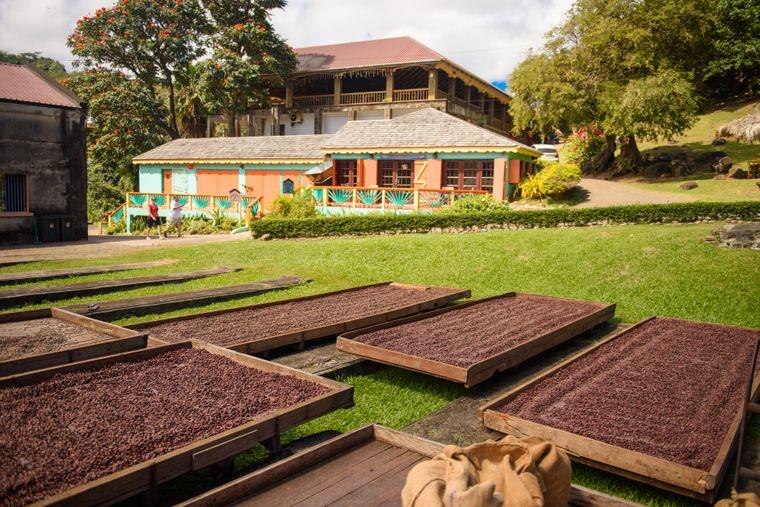 Das Belmont Estate auf der Gwürzinsel Grenada widmet sich dem Kakao. Vom Anbau bis zur Schokoladenproduktion kannst du bei einem Besuch alles nachvollziehen.