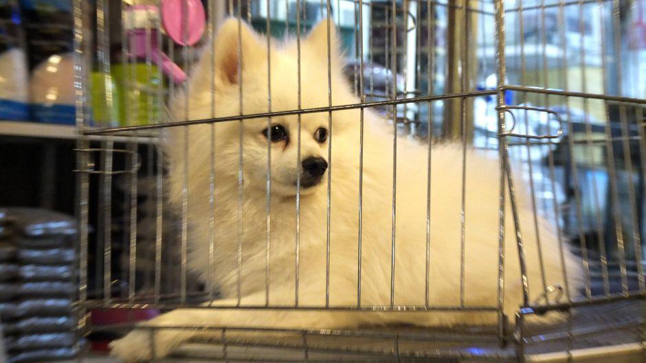 Ein Hund wird auf dem Markt von Hanoi zum Verkauf angeboten. Viele der Tiere landen im Kochtopf.