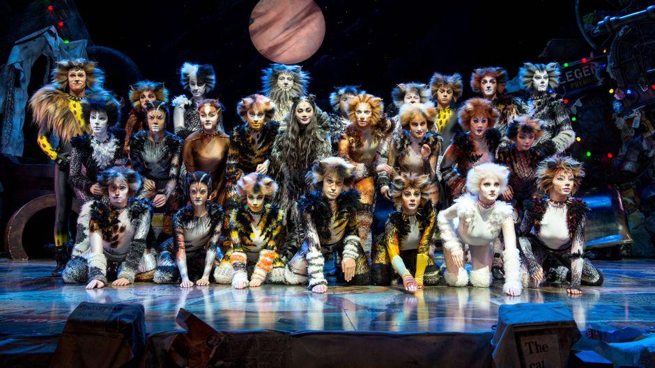 "Du kannst das Musical ""Cats"" online streamen."