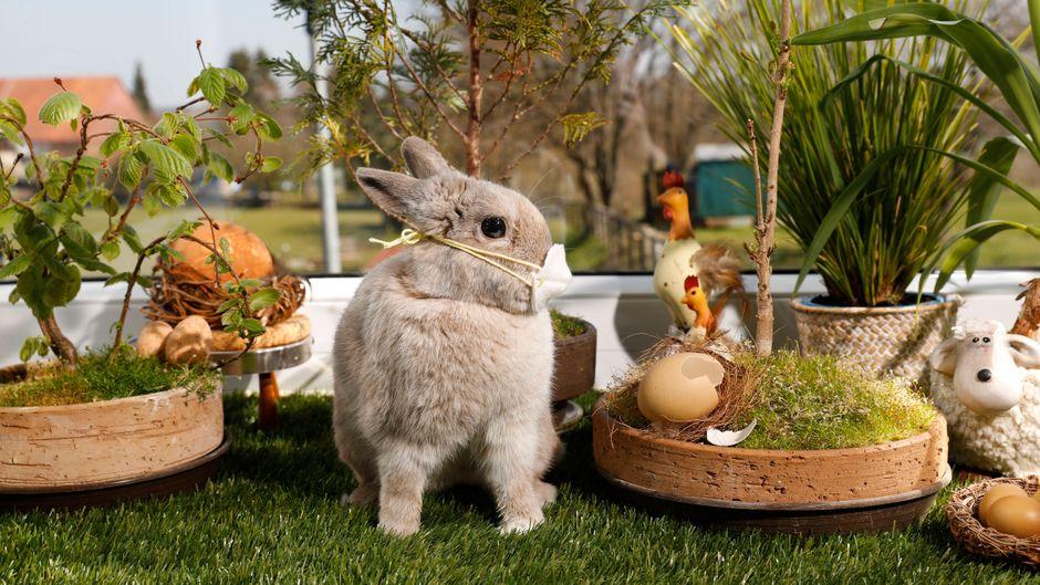 Der Osterhase hat in Australien kein Einreiseverbot.