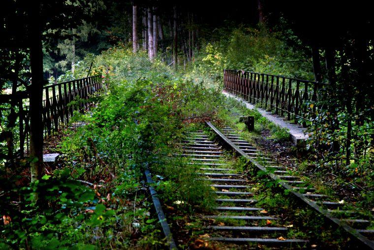 Eisenbahnschienen im Eckertal.