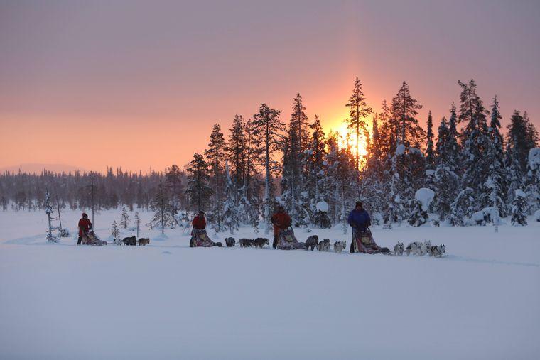Unterwegs mit Schlittenhunden – ein atemberaubendes Erlebnis in Finnland.