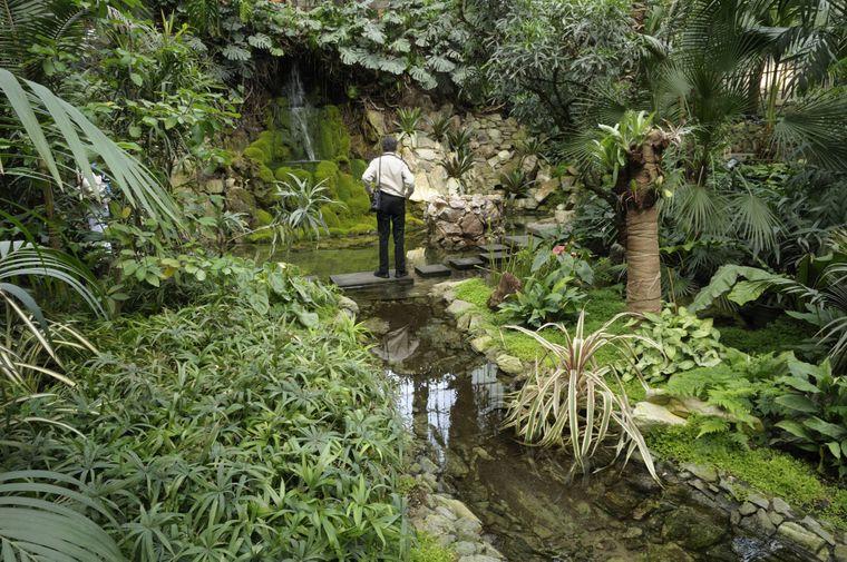 Exotische Pflanzen im Palmenhaus in Frankfurt am Main lassen dich den Alltag vergessen.