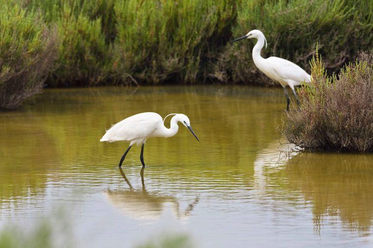 Mallorcas üppige Natur abseits der Küste kannst du im Naturpark S'Albufera erleben.