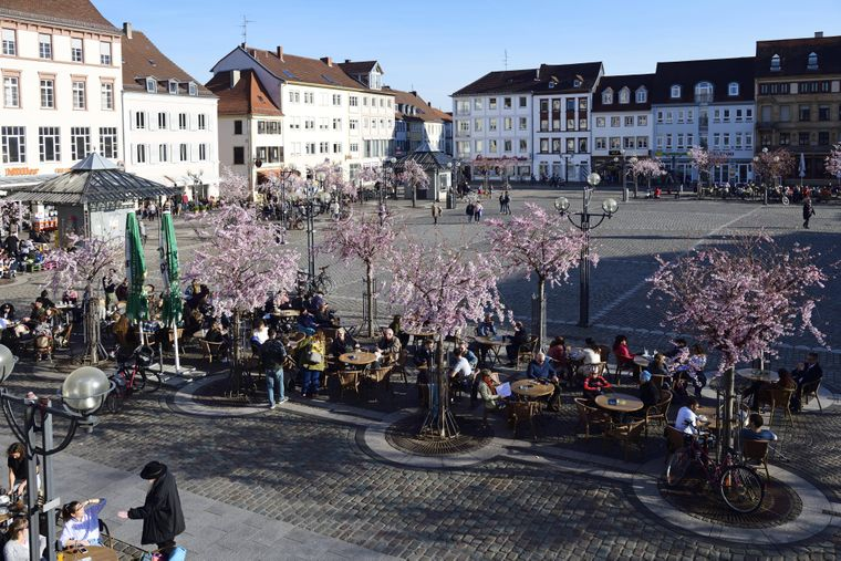 Blühende Mandelbäumen in Landau in der Pfalz