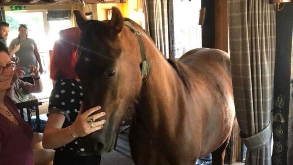 Dieses Pony stolperte in die Bar The Oak Inn in New Forest, England.