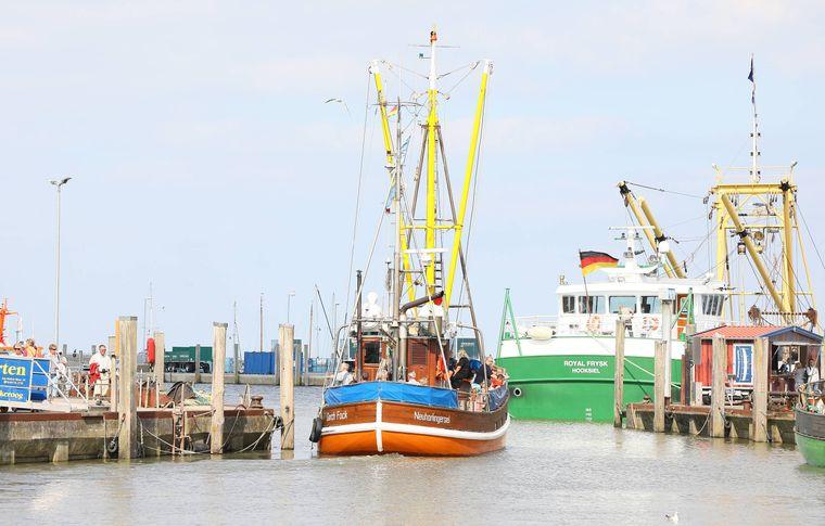 Bei einer Ausfahrt mit dem Kutter Gorch Fock kannst du miterleben, wie an der Nordseeküste der Fisch frisch gefangen wird.