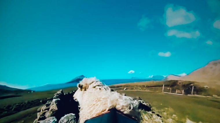 Kamera auf einem Schafsrücken auf den Färöer Inseln.