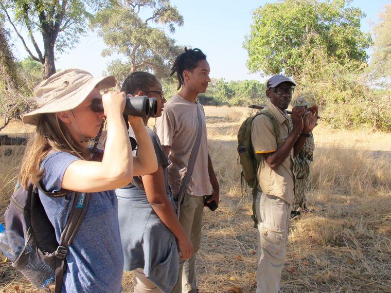 Auf Safari in South Luangwa.
