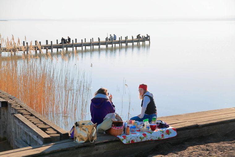Weiden am Neusiedlersee im Burgenland – hier kannst du prima beim Picknicken Vögel beobachten.