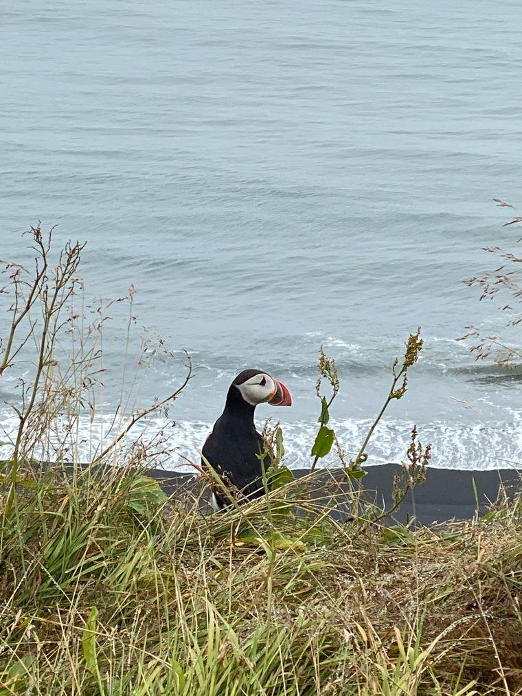 Bei einer Fahrt in den Südosten des Landes stehen die Chancen gut, an der Küste auch Papageientaucher zu sehen.