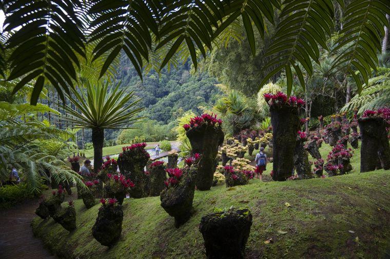 Im Jardin de Balata auf Martinique wachsen mehr als 3000 exotische Pflanzen wie diese Bromelien. Die Karibikinsel ist für ihre reiche Flora und Fauna bekannt.
