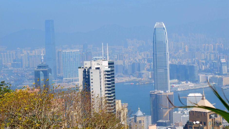In Hongkong wurde ein neuer Höchststand an Denguefieber-Infizierten erreicht. (Symbolbild)