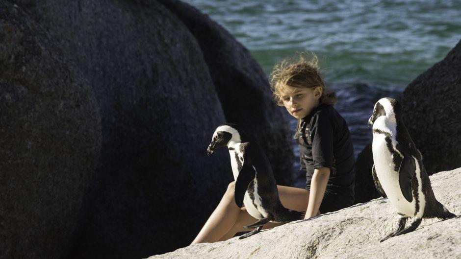 Ein Mädchen schaut die Pinguine am Boulders Beach aus nächster Nähe an.