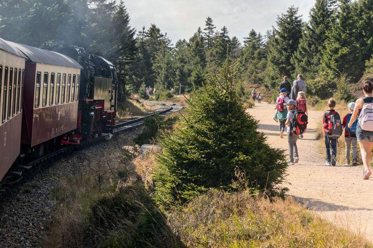 Die Brockenbahn fährt durch den Nationalpark Harz. Einsteigen oder wandern, du hast die Wahl!