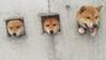 Diese drei Shibas sind Shimabaras neue Attraktion.