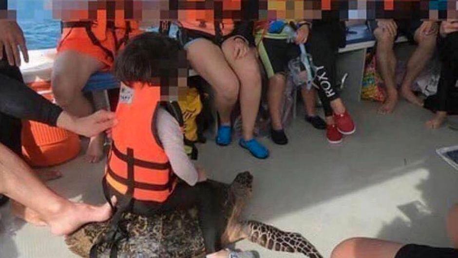 Dieses Foto sorgt für heftige Reaktionen: Ein Kind reitet auf einem Exemplar einer vom Aussterben bedrohten Schildkrötenart.