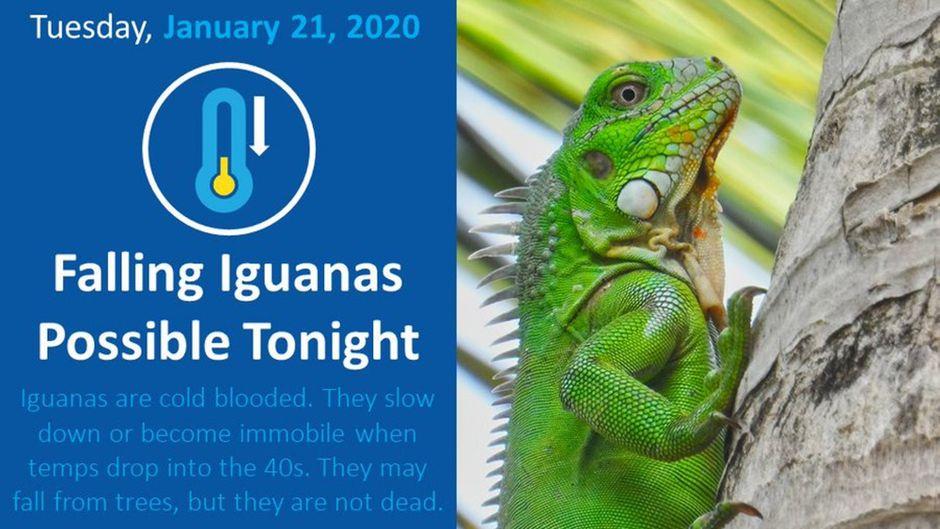 Fallende Leguane? Das meint die Wetterbehörde tatsächlich ernst.