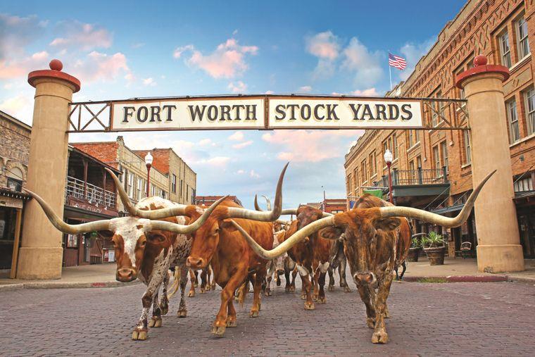 In Fort Worth bei Dallas gibt es nicht nur stilechte Saloons, sondern auch täglich Viehtriebe.