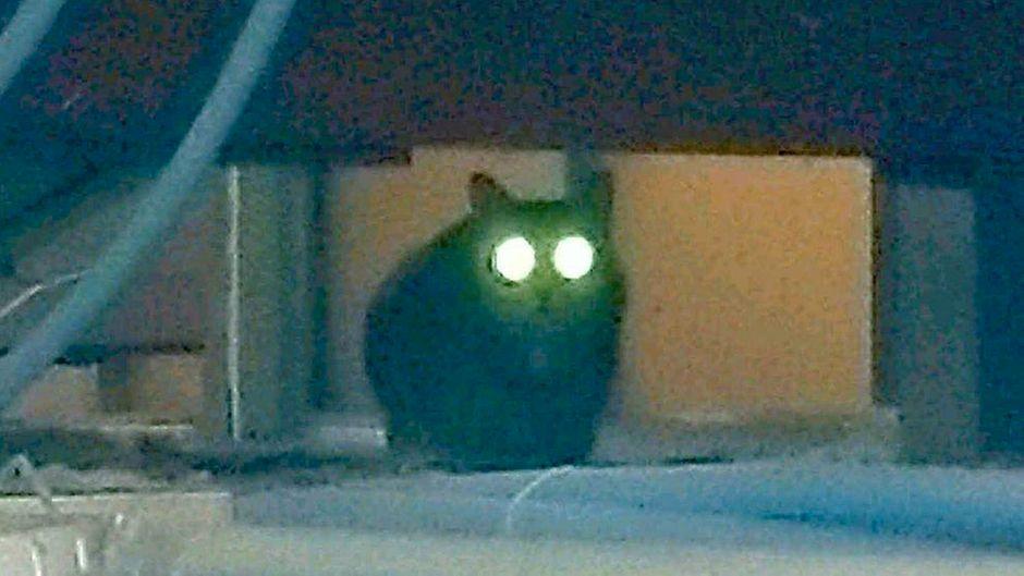 Über eine Woche lang versteckte sich Katze Pepper am JFK-Flughafen vor den Beamten.