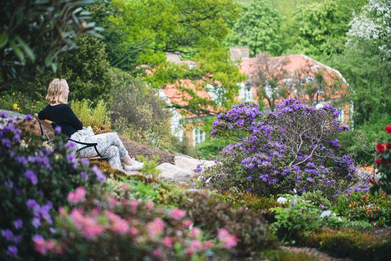 Der Botaniska Trädgård, also der Botanische Garten, in Göteborgs Stadtviertel Änggården ist eines der beliebtesten Besucherziele in Schweden.