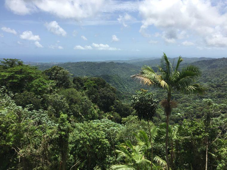 "Blick über die Baumwipfel des Regenwalds  ""El Yunque"", Puerto Rico."