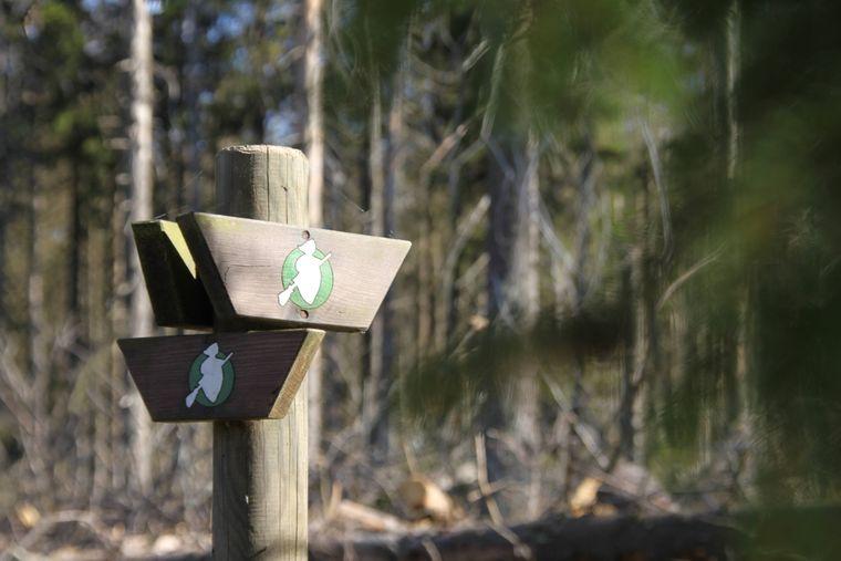 Immer Ausschau nach den Hexen halten – sie weisen auf dem Harzer Hexensteig den Weg.