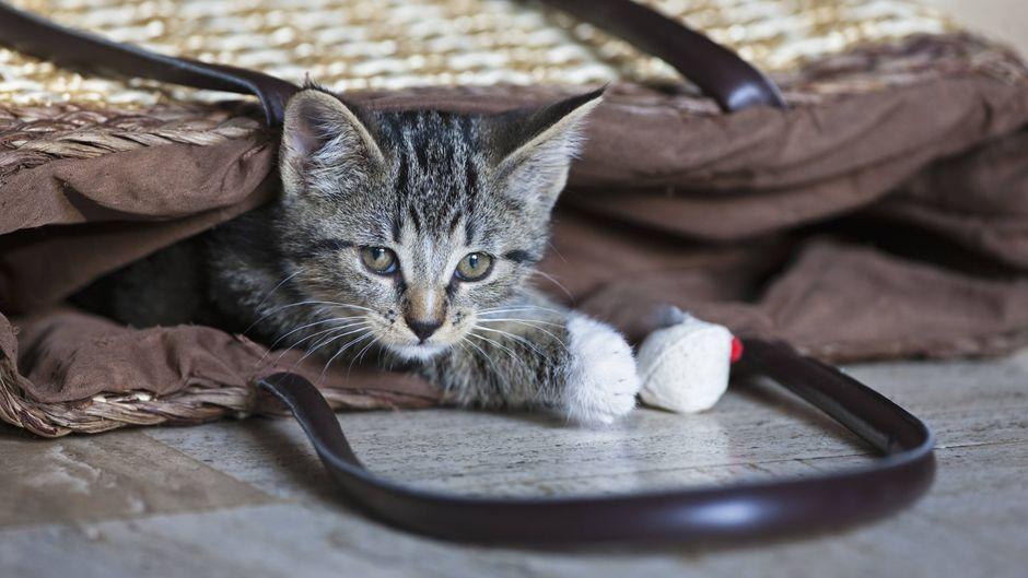Eine Katze darf bei British Airways nicht im Handgepäck mitgeführt werden. (Symbolfoto)