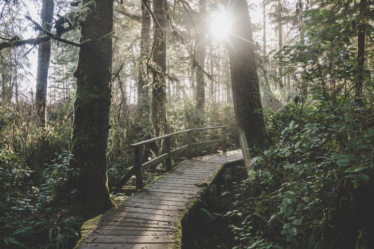 Der Rainforest Trail führt durch die Regenwälder des Pacific-Rim-Nationalparks.