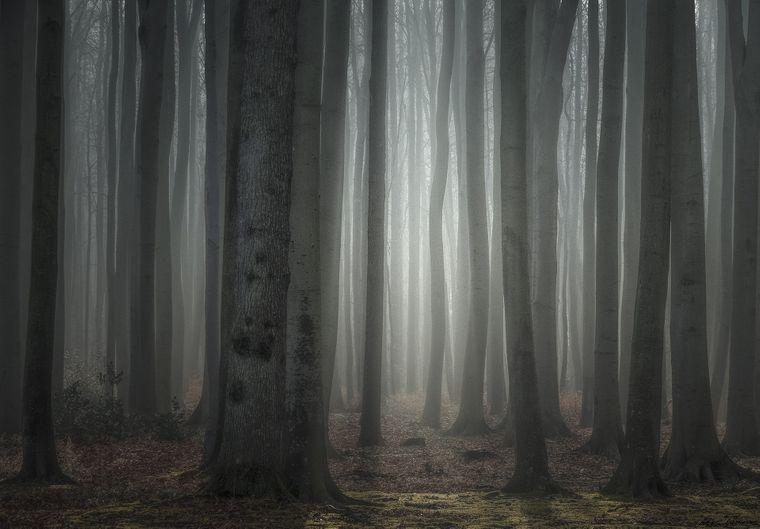 Der Gespensterwald Nienhagen.